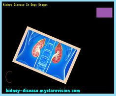 Kidney Disease In Dogs Stages 102037 - Start Healing Your Kidneys Today!