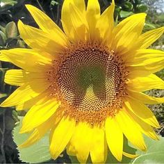 THIS vibrant yellow sunflower captured by Barbara Gibson is our Photo of the Day.