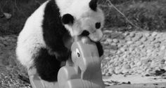 Panda upada XD