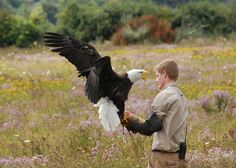 To me this is an incredible photo of a Bald Eagle and it's handler because of how calm, cool, and collected the handler appears to be. If you like Eagles be sure to watch the Decorah Eagles Live Webcam.