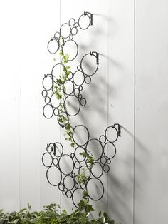 Modern Circle Wall Trellis - Wall Art Trellis | Gardener's Supply Wall Trellis, Garden Trellis, Privacy Trellis, Metal Trellis, Art Mural En Plein Air, Diy Wall, Wall Decor, Garden Wall Art, Garden Walls