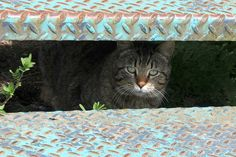 #Cats cats cats cats cats.....  Like,Repin,Share, Thanks!