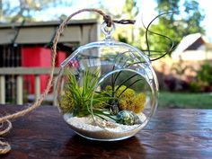 We get several stunning pictures that you can use as design ideas and/or for informative purpose of Air Plant Terrariums. Description from artlikeart.com. I searched for this on bing.com/images