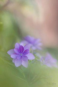 Little, purple flowers. Pastel Flowers, Flowers Nature, My Flower, Flower Power, Wild Flowers, Beautiful Flowers, Purple Flower Photos, Simply Beautiful, All Things Purple