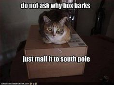 Picture # 138 collection funny dogs pics with captions pics) for June 2016 – Funny Pictures, Quotes, Pics, Photos, Images and Very Cute animals. Funny Shit, Funny Cute, Funny Stuff, Funny Animal Pictures, Funny Animals, Cute Animals, Funniest Animals, Funniest Pictures, Animal Pics