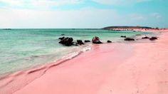 Bienvenu au Paradis, sur la plus jolies des îles de l'archipel des Bahamas : Harbour Island.  La plage en question s'appelle tout simplement la Pink Beach, la Plage Rose, et s'inscrit tout naturellement au palmarès des plages les plus belles du monde.