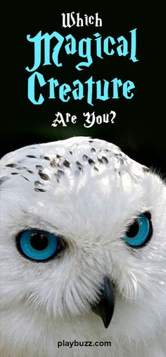 Do you love the idea that magical creatures are real? Take this quiz and find out which magical creature you are!
