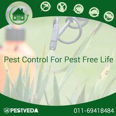 Control #Pest with PestVeda. Contact- 011 69418484 Visit- www.pestveda.com #pestcontrol #pestcure
