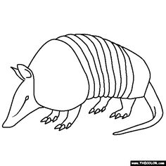 armadillo coloring page - armadillo cartoon pictures clipart best school ideas