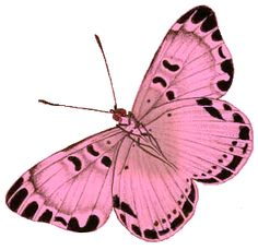 The Pink Frog   Leaping Frog Designs: Big Butterfly Free PNG Image Pink Green Purple ...