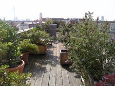 roof garden in Berlin