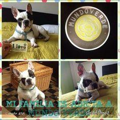 """¡El perrito Spot, espera por tú """"Me gusta"""" en #mimascotamundoverde!"""