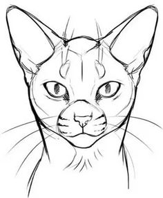 Cat Face Drawing, Face Drawing Reference, Cat Reference, Cute Cat Drawing, Body Drawing, Warrior Cat Drawings, Warrior Cats, Animal Drawings, Art Drawings