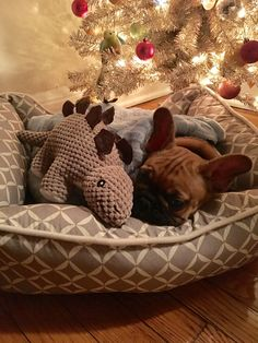 French Bulldog Puppy under the Christmas Tree