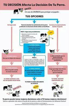 Tu decision afecta la decision de tu perro