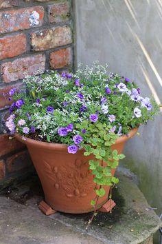 Flower Pots, Flowers, Planter Pots, Gardening, Green, Kitchen, Cuisine, Container Plants, Floral