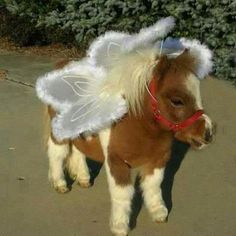 Miniature Baby Horse ...........click here to find out more http://googydog.com