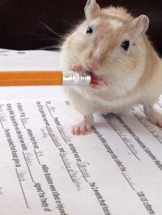 Gerbils will eat anything>>>>that doesn't always mean they should.