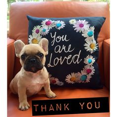 'You are Loved...thank you', French Bulldog Puppy