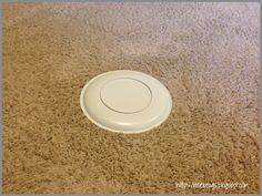 How to Remove Pet Stains From Carpet: a tupperware lid on the stain would keep everyone from stepping on the wet floor (but would the carpet dry completely?)