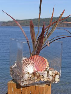 SHELL BEACH DECOR arrangement in glass coastal by justbeachynow