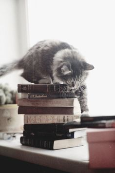 .grey kitten + books | animals + pet photography #cats.