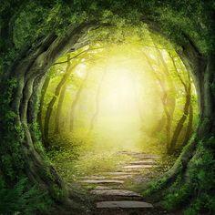 Wandbild Wald mit Lichtung, ShopHit Serie 30x30cm