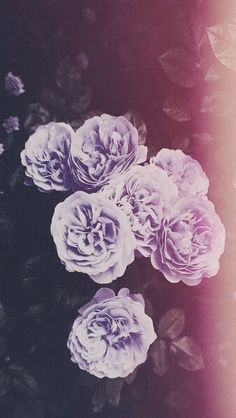 Imagen de flowers, rose, and purple