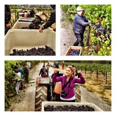 Behind the scenes during harvest!