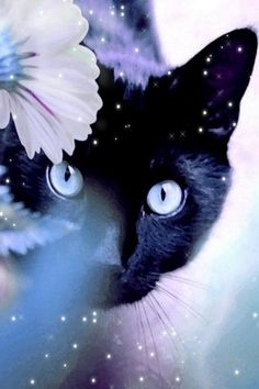Magic cat iPad background Can't resist the Black Cat Cute Kittens, Cats And Kittens, Ragdoll Kittens, Tabby Cats, Bengal Cats, Kitty Cats, Beautiful Cats, Animals Beautiful, Cute Animals