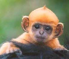 Monkeys #cute