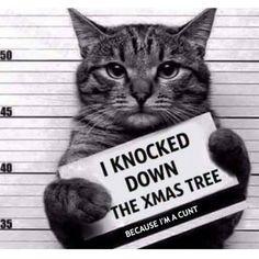 #caughtinaction #christmaswithacat #truestory #christmastree #assholethecat #iwillkillyouall #cuntology #catlover #kittycat #nofucksweregiven