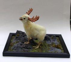 Diorama, four legged moose chicken taxidermy  curiosity by Casper's Creatures on Etsy, $172.87