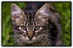 Cat!! - http://www.1pic4u.com/blog/2014/09/26/cat-52/