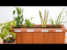 The Advantages Of Growing Food Indoors With Hydroponic Gardening Regrow Vegetables, Growing Vegetables, Hydroponic Farming, Hydroponics, Organic Gardening, Gardening Tips, Urban Gardening, Urban Farming, Indoor Gardening