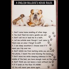 Image result for Bulldog rules