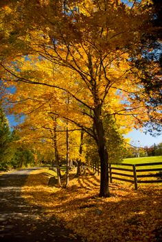 Weston, CT, maintains its rustic charm with strict two-acre zoning. Lots of open space and gorgeous vistas. Beautiful World, Beautiful Places, Seasons In The Sun, Autumn Scenes, Autumn Garden, Countryside, Scenery, Places To Visit, Landscape