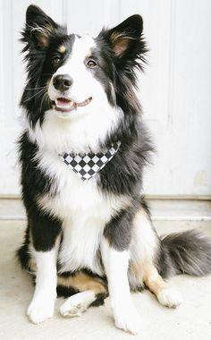 "#Dogs #Honden Click visit site and Check out Best ""Border Collie"" T-shirts. This website is outstanding.  Tip: You can search ""your name"" or ""your favorite shirts"" at search bar on the top."
