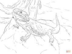 Bearded Dragon Coloring Pages   dragon   Pinterest   Bearded dragon