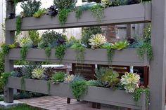 Beach Contemporary - contemporary - Landscape - Orange County - Living Gardens Landscape Design