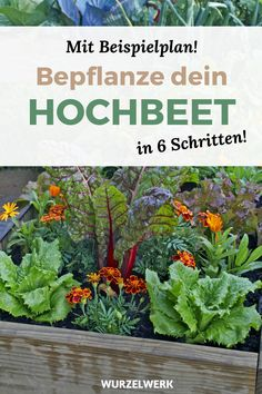 Planting raised beds in 6 steps (+ example plan)- Hochbeet bepflanzen in 6 Schritten (+ Beispielplan) You have a new raised bed and now want to put it in … - Growing Plants, Growing Vegetables, Garden Beds, Garden Art, Comment Planter, Plantar, Plantation, Back Gardens, Raised Beds