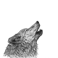 Howling Wolf Art Print, Ballpoint Pen Drawing ($11) ❤ liked on Polyvore featuring home, home decor, wall art and paper wall art
