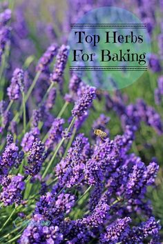 These are the top Herbs for baking and they come in several forms, fresh, dried and pure oil. The most potent is pure essential oil, then dried and fresh. Pure Oils, Pure Essential Oils, Baking Tips, Baking Recipes, Mosquito Repelling Plants, Coconut Ice Cream, Vintage Country, Country Style, Freshly Baked