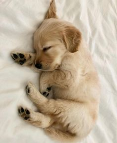 Super Cute Puppies, Cute Baby Dogs, Cute Little Puppies, Cute Dogs And Puppies, Cute Little Animals, Cute Funny Animals, Pet Dogs, Dog Cat, Doggies