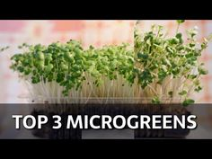 Top 3 Microgreens - YouTube The Creator, Youtube, Plants, Top, Plant, Youtubers, Crop Shirt, Shirts, Youtube Movies