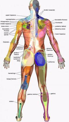 Trigger Point Massage, Trigger Point Therapy, Body Guide, Autogenic Training, Reflexology Massage, Lymph Massage, Neck Massage, Massage Funny, Physical Therapy