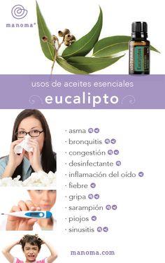 Aceites Esenciales | Eucalipto - Manoma Spa & Wellness Los Cabos