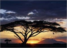 When I go to Africa, I am starting in Kenya!