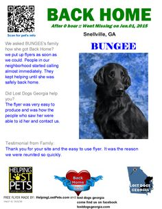 Helping Lost Pets | Dog - Flat-Coated Retriever - Back Home