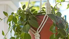 Easy Macrame Plant Hanger   - I love this, I haven't been able to find any of these to buy. This is great. From the My Lowes Site